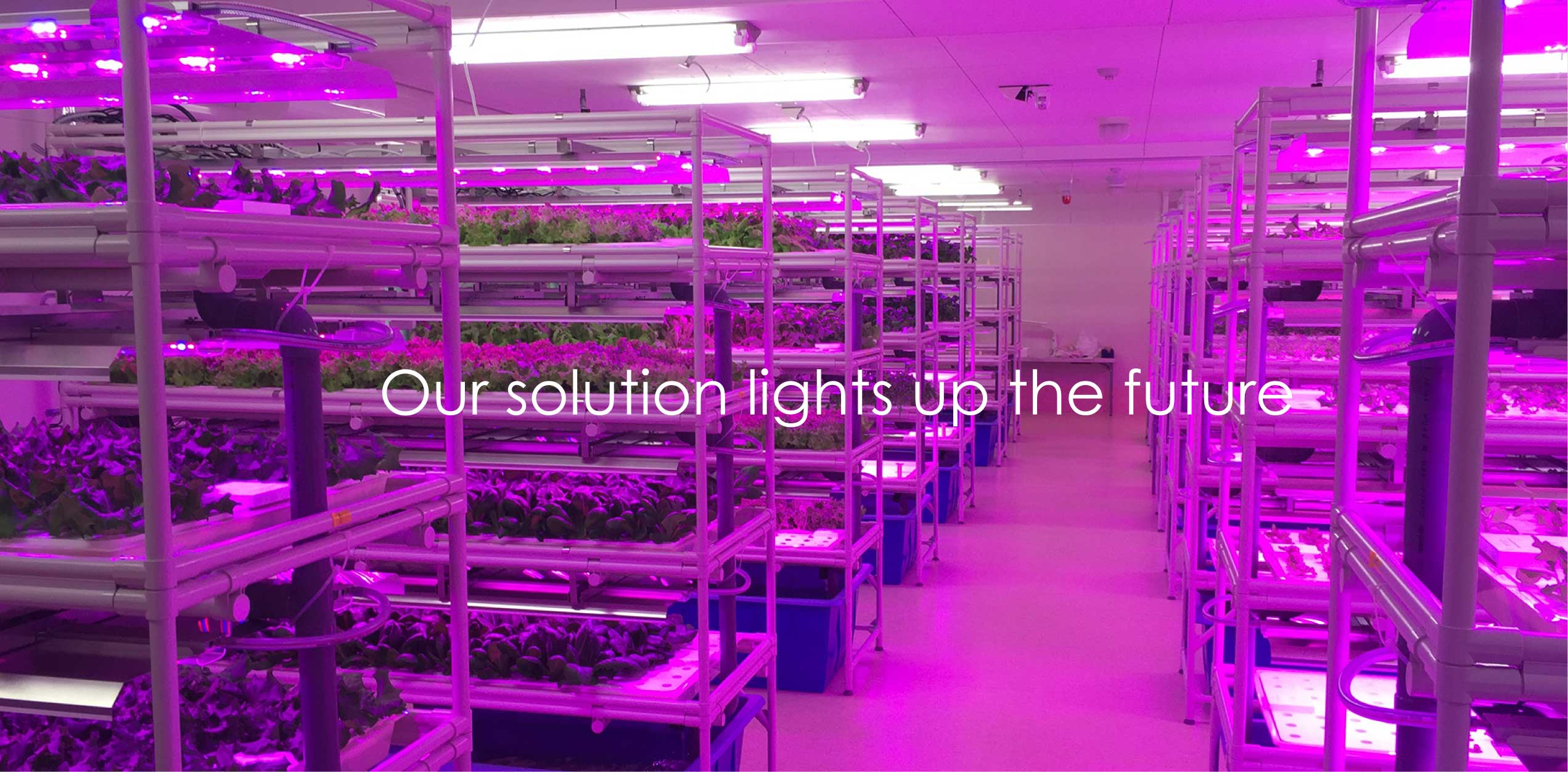 Our solution lights up the future